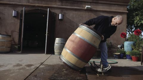 david winemaking